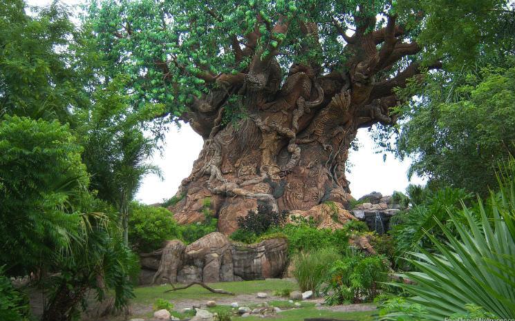 As 10 melhores atrações do Animal Kingdom!!