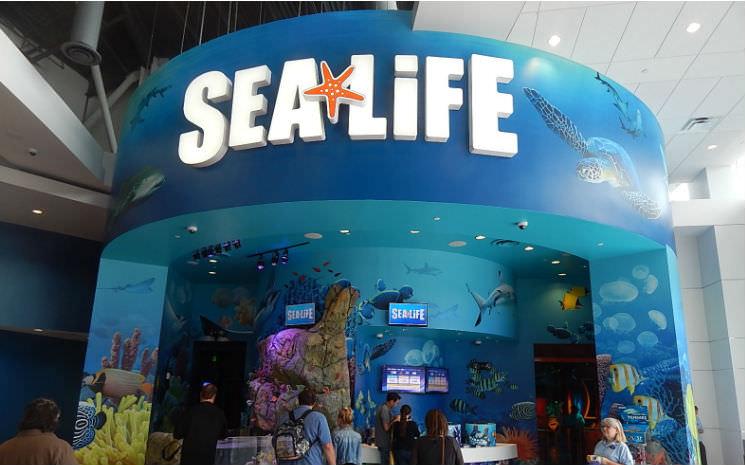 Sea Life Orlando Aquarium já começou a encher seus tanques!!