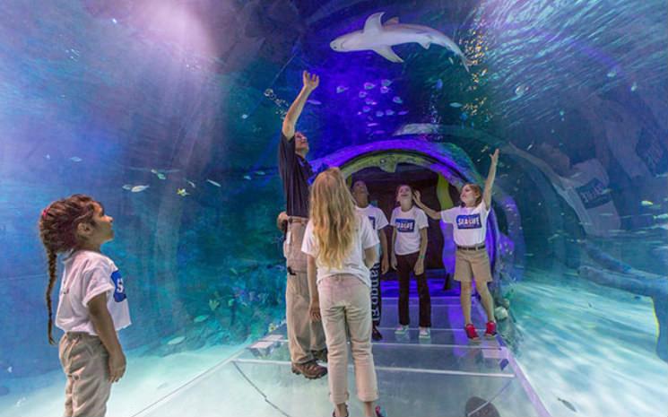 Orlando Sea Life, fomos conhecer os tubarões brancos que chegaram no aquário!!