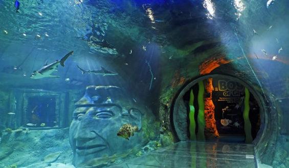 Orlando Sea Life Aquarium – fomos conhecer por completo!!
