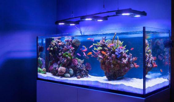 Loja de aquário, peixes e corais em Orlando