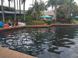 Sea World, Dolphin Cove