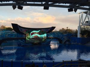 Sea World, show da Shamu