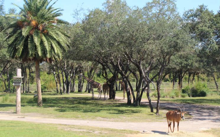 O hotel da Disney com tema da África – Animal Kingdom Lodge